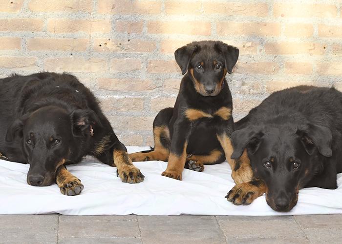Alle pups geplaatst